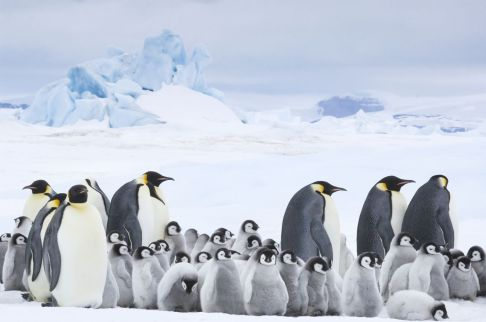 march-of-the-penguins-616177l